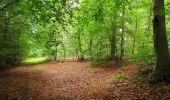 Randonnée Marche SAINT-JEAN-AUX-BOIS - en forêt de Compiègne_6_les Grands Monts_la route tournante sur la tête St-Jean - Photo 128