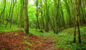Randonnée Marche SAINT-JEAN-AUX-BOIS - en forêt de Compiègne_6_les Grands Monts_la route tournante sur la tête St-Jean - Photo 50
