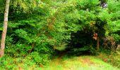 Randonnée Marche SAINT-JEAN-AUX-BOIS - en forêt de Compiègne_6_les Grands Monts_la route tournante sur la tête St-Jean - Photo 43
