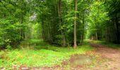Randonnée Marche SAINT-JEAN-AUX-BOIS - en forêt de Compiègne_6_les Grands Monts_la route tournante sur la tête St-Jean - Photo 79