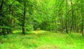 Randonnée Marche SAINT-JEAN-AUX-BOIS - en forêt de Compiègne_6_les Grands Monts_la route tournante sur la tête St-Jean - Photo 80