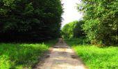 Randonnée Marche SAINT-JEAN-AUX-BOIS - en forêt de Compiègne_6_les Grands Monts_la route tournante sur la tête St-Jean - Photo 91