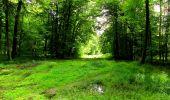 Randonnée Marche SAINT-JEAN-AUX-BOIS - en forêt de Compiègne_6_les Grands Monts_la route tournante sur la tête St-Jean - Photo 96