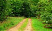 Randonnée Marche SAINT-JEAN-AUX-BOIS - en forêt de Compiègne_6_les Grands Monts_la route tournante sur la tête St-Jean - Photo 127