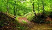 Randonnée Marche SAINT-JEAN-AUX-BOIS - en forêt de Compiègne_6_les Grands Monts_la route tournante sur la tête St-Jean - Photo 34