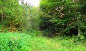 Randonnée Marche SAINT-JEAN-AUX-BOIS - en forêt de Compiègne_6_les Grands Monts_la route tournante sur la tête St-Jean - Photo 90