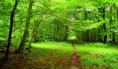 Randonnée Marche SAINT-JEAN-AUX-BOIS - en forêt de Compiègne_6_les Grands Monts_la route tournante sur la tête St-Jean - Photo 65
