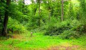 Randonnée Marche SAINT-JEAN-AUX-BOIS - en forêt de Compiègne_6_les Grands Monts_la route tournante sur la tête St-Jean - Photo 154