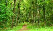 Randonnée Marche SAINT-JEAN-AUX-BOIS - en forêt de Compiègne_6_les Grands Monts_la route tournante sur la tête St-Jean - Photo 170