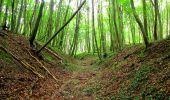 Randonnée Marche SAINT-JEAN-AUX-BOIS - en forêt de Compiègne_6_les Grands Monts_la route tournante sur la tête St-Jean - Photo 52