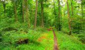 Randonnée Marche SAINT-JEAN-AUX-BOIS - en forêt de Compiègne_6_les Grands Monts_la route tournante sur la tête St-Jean - Photo 24