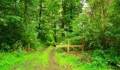 Randonnée Marche SAINT-JEAN-AUX-BOIS - en forêt de Compiègne_6_les Grands Monts_la route tournante sur la tête St-Jean - Photo 108