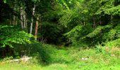 Randonnée Marche SAINT-JEAN-AUX-BOIS - en forêt de Compiègne_6_les Grands Monts_la route tournante sur la tête St-Jean - Photo 84