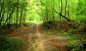 Randonnée Marche SAINT-JEAN-AUX-BOIS - en forêt de Compiègne_6_les Grands Monts_la route tournante sur la tête St-Jean - Photo 36