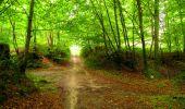 Randonnée Marche SAINT-JEAN-AUX-BOIS - en forêt de Compiègne_6_les Grands Monts_la route tournante sur la tête St-Jean - Photo 33