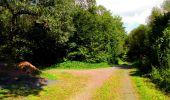 Randonnée Marche SAINT-JEAN-AUX-BOIS - en forêt de Compiègne_6_les Grands Monts_la route tournante sur la tête St-Jean - Photo 161