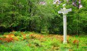 Randonnée Marche SAINT-JEAN-AUX-BOIS - en forêt de Compiègne_6_les Grands Monts_la route tournante sur la tête St-Jean - Photo 75