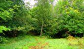 Randonnée Marche SAINT-JEAN-AUX-BOIS - en forêt de Compiègne_6_les Grands Monts_la route tournante sur la tête St-Jean - Photo 41
