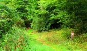 Randonnée Marche SAINT-JEAN-AUX-BOIS - en forêt de Compiègne_6_les Grands Monts_la route tournante sur la tête St-Jean - Photo 17