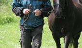 Trail Equestrian Tenneville - Chaussée Marie-Thérèse - Photo 24
