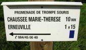 Trail Equestrian Tenneville - Chaussée Marie-Thérèse - Photo 58
