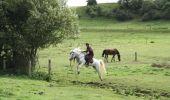 Trail Equestrian Tenneville - Chaussée Marie-Thérèse - Photo 70