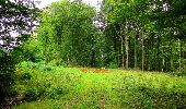 Randonnée Marche LONGPONT - en forêt de Retz_57_Longpont_Saint-Pierre Aigle_AR - Photo 64