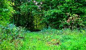Randonnée Marche LONGPONT - en forêt de Retz_57_Longpont_Saint-Pierre Aigle_AR - Photo 43