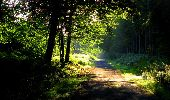 Randonnée Marche LONGPONT - en forêt de Retz_57_Longpont_Saint-Pierre Aigle_AR - Photo 106