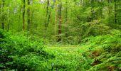 Randonnée Marche LONGPONT - en forêt de Retz_57_Longpont_Saint-Pierre Aigle_AR - Photo 53