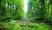 Randonnée Marche LONGPONT - en forêt de Retz_57_Longpont_Saint-Pierre Aigle_AR - Photo 34