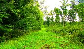 Randonnée Marche LONGPONT - en forêt de Retz_57_Longpont_Saint-Pierre Aigle_AR - Photo 69