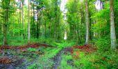 Randonnée Marche LONGPONT - en forêt de Retz_57_Longpont_Saint-Pierre Aigle_AR - Photo 13