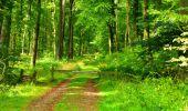 Randonnée Marche LONGPONT - en forêt de Retz_57_Longpont_Saint-Pierre Aigle_AR - Photo 98