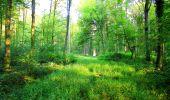 Randonnée Marche LONGPONT - en forêt de Retz_57_Longpont_Saint-Pierre Aigle_AR - Photo 9