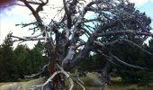 Trail Walk LES ANGLES - Le tour du Llaret 2 - Photo 7