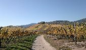 Trail Walk KATZENTHAL - aux alentours de Niedermorschwihr  - Photo 3