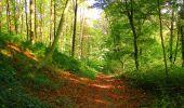 Trail Walk PIERREFONDS - en forêt de Compiègne_7_Mont St-Pierre_Mont Arcy_étangs de St-Pierre - Photo 92