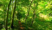 Trail Walk PIERREFONDS - en forêt de Compiègne_7_Mont St-Pierre_Mont Arcy_étangs de St-Pierre - Photo 93