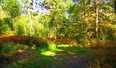 Trail Walk PIERREFONDS - en forêt de Compiègne_7_Mont St-Pierre_Mont Arcy_étangs de St-Pierre - Photo 70