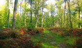 Trail Walk PIERREFONDS - en forêt de Compiègne_7_Mont St-Pierre_Mont Arcy_étangs de St-Pierre - Photo 31