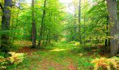 Trail Walk PIERREFONDS - en forêt de Compiègne_7_Mont St-Pierre_Mont Arcy_étangs de St-Pierre - Photo 25