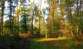 Trail Walk PIERREFONDS - en forêt de Compiègne_7_Mont St-Pierre_Mont Arcy_étangs de St-Pierre - Photo 11