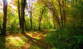 Trail Walk PIERREFONDS - en forêt de Compiègne_7_Mont St-Pierre_Mont Arcy_étangs de St-Pierre - Photo 43