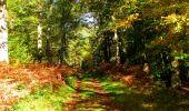 Trail Walk PIERREFONDS - en forêt de Compiègne_7_Mont St-Pierre_Mont Arcy_étangs de St-Pierre - Photo 110
