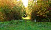 Trail Walk PIERREFONDS - en forêt de Compiègne_7_Mont St-Pierre_Mont Arcy_étangs de St-Pierre - Photo 40