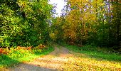 Trail Walk PIERREFONDS - en forêt de Compiègne_7_Mont St-Pierre_Mont Arcy_étangs de St-Pierre - Photo 17