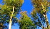 Trail Walk PIERREFONDS - en forêt de Compiègne_7_Mont St-Pierre_Mont Arcy_étangs de St-Pierre - Photo 104