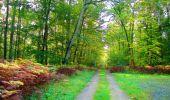 Trail Walk PIERREFONDS - en forêt de Compiègne_7_Mont St-Pierre_Mont Arcy_étangs de St-Pierre - Photo 23
