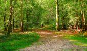 Trail Walk PIERREFONDS - en forêt de Compiègne_7_Mont St-Pierre_Mont Arcy_étangs de St-Pierre - Photo 77